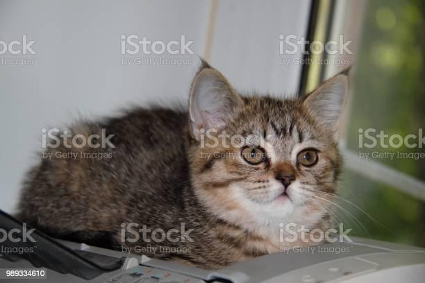 Grumpy cat picture id989334610?b=1&k=6&m=989334610&s=612x612&h=szw2vi4rcbx66qigqa07bhazpfuetuy2dn2vbuk3c8a=