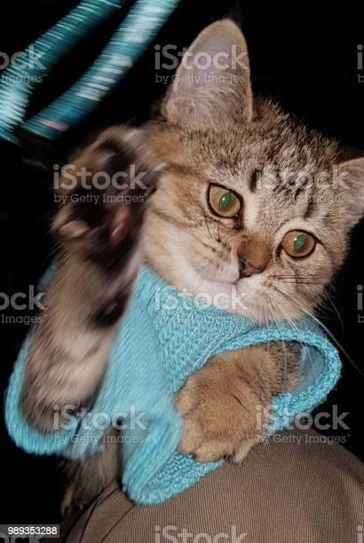 Grumpy cat picture id989353288?b=1&k=6&m=989353288&s=612x612&h=ruxssmnztpvpdhww8tb ydpm7wuzlaiwmgqdbnjr3r8=