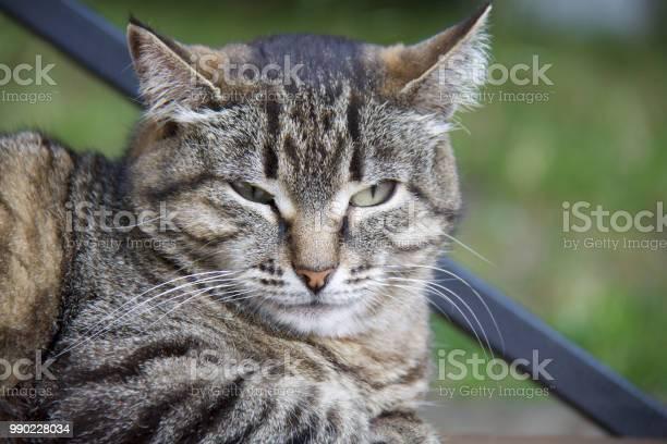 Grumpy cat picture id990228034?b=1&k=6&m=990228034&s=612x612&h=lqzs xybtguiwe s fnbhz5stkzk8lfoh t1rqkufdo=