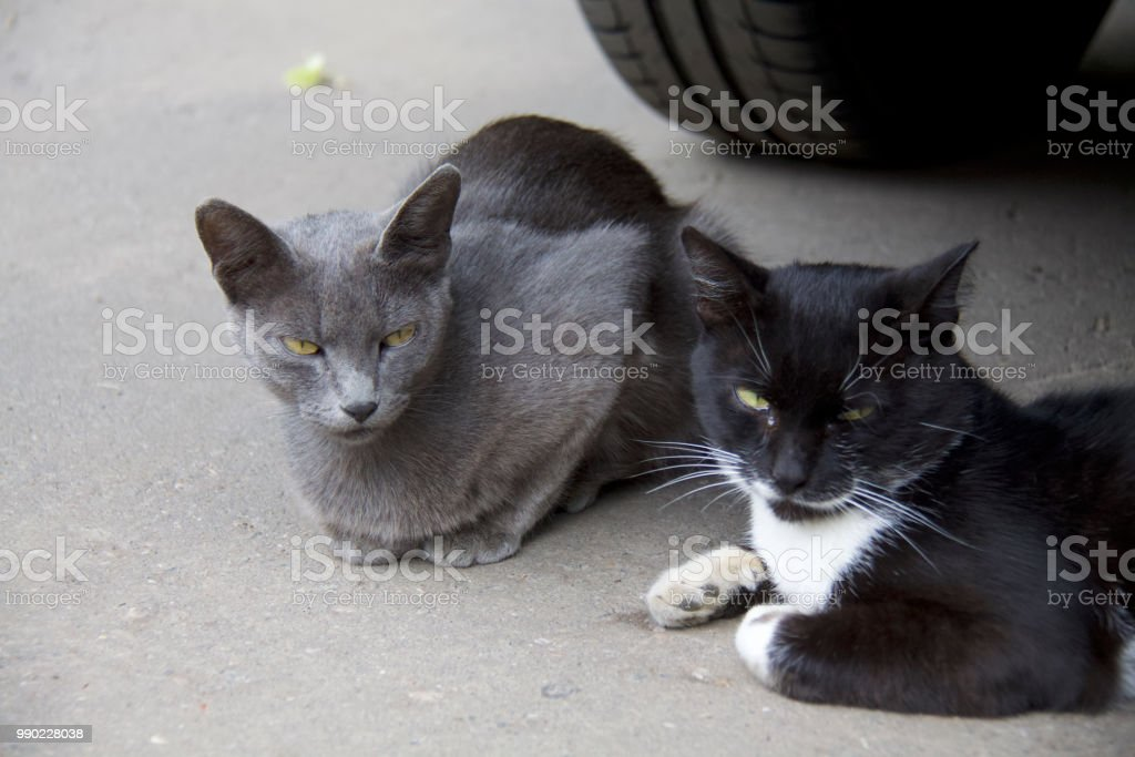 Grumpy cat стоковое фото