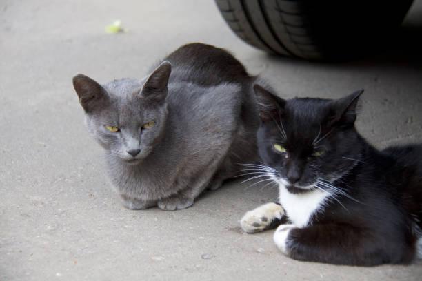Cтоковое фото Grumpy cat
