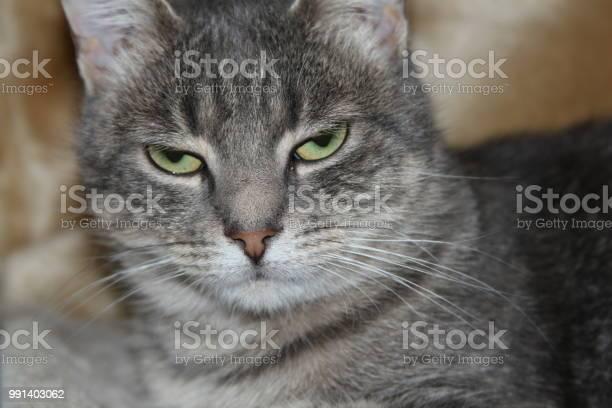 Grumpy cat picture id991403062?b=1&k=6&m=991403062&s=612x612&h=poldz7eshnh3ntmdqqem447sgbkt1rbss9dgwu4sohg=
