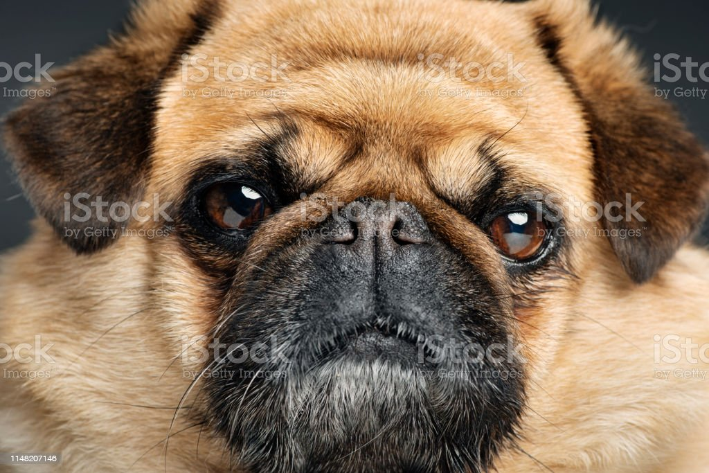 Grumpy Dog With A Very Sad Face Stock Photo Download Image Now Istock