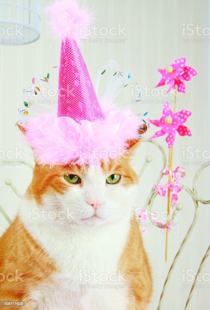 Grumpy Orange Tabby Cat Wearing A Pink Birthday Hat