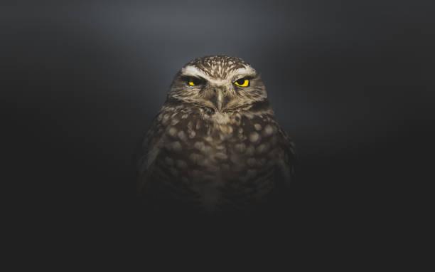 Grumpy owl standing alone in the darkness picture id1075299558?b=1&k=6&m=1075299558&s=612x612&w=0&h=ksvlyeremleimzpe47kv1pfo0gn7jaxggrvcxk3lqqq=