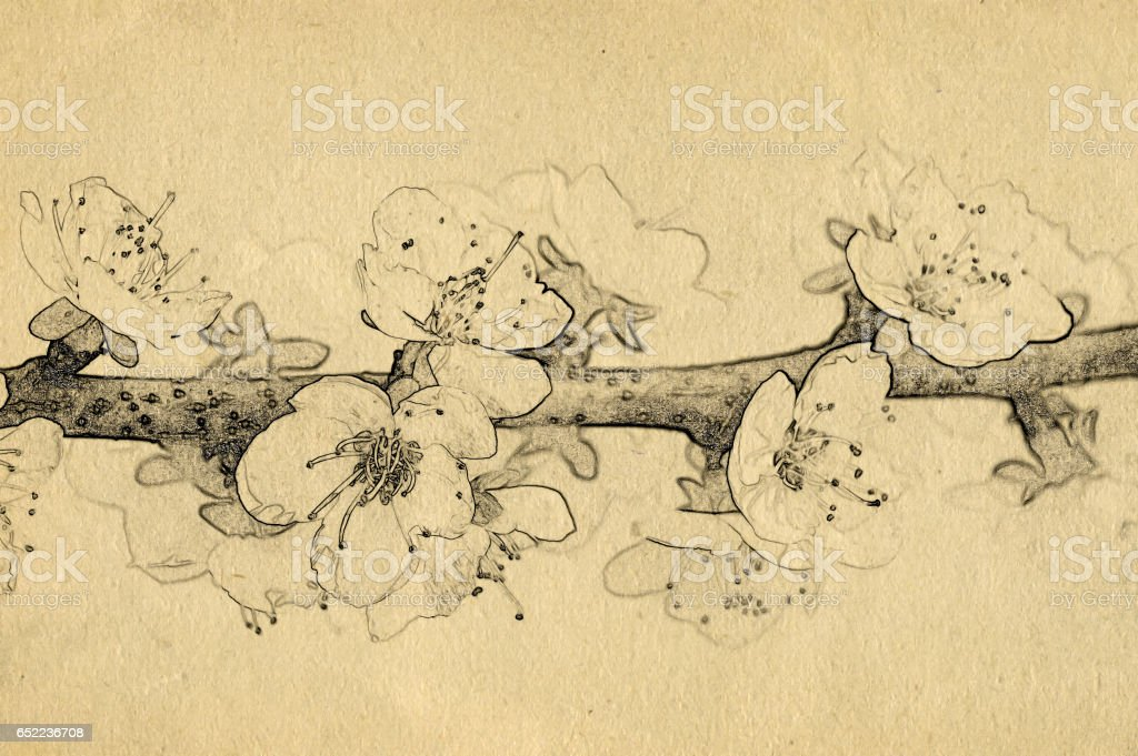 Grunge background with paper texture and apricot tree branch with white flowers. Sketch style. vector art illustration