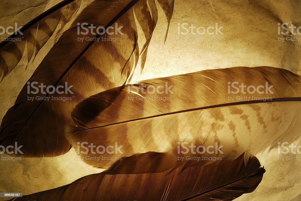 Grunge feather background royalty-free stock photo