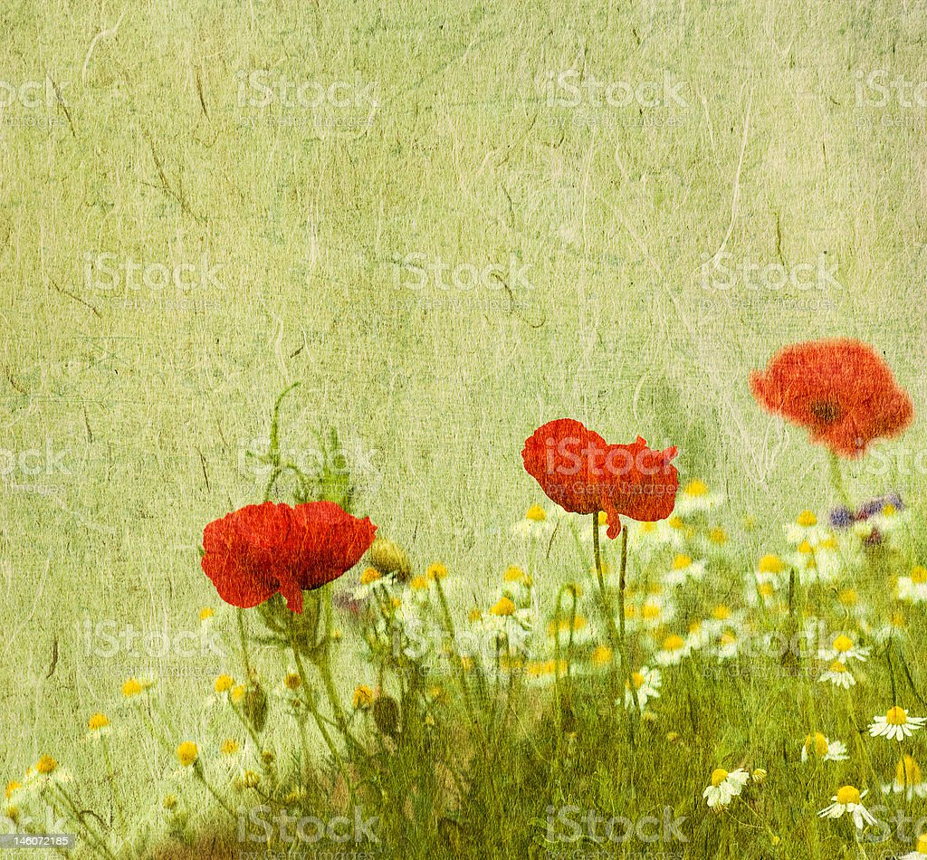grunge floral background with poppies royalty-free stock photo