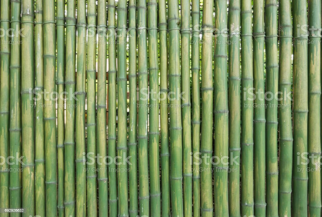 Grunge green bamboo fence stock photo