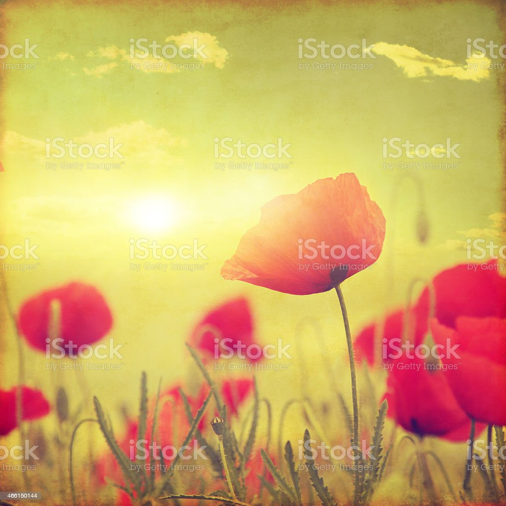 Grunge image of poppy field at sunset. stock photo