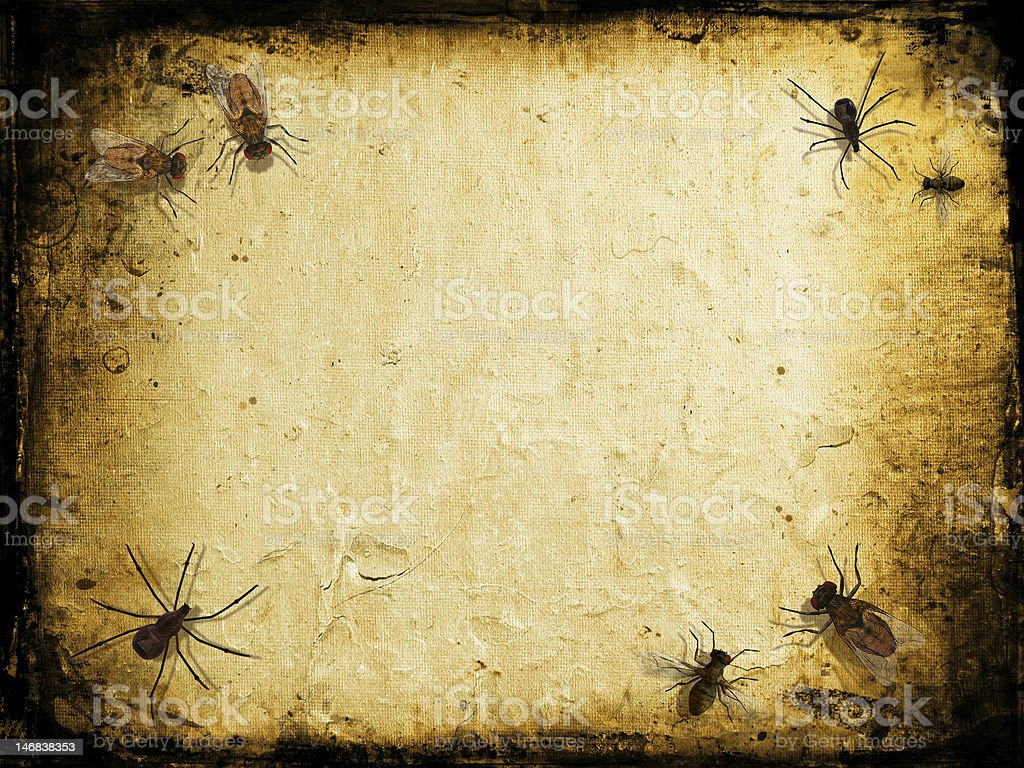 Grunge insects stock photo