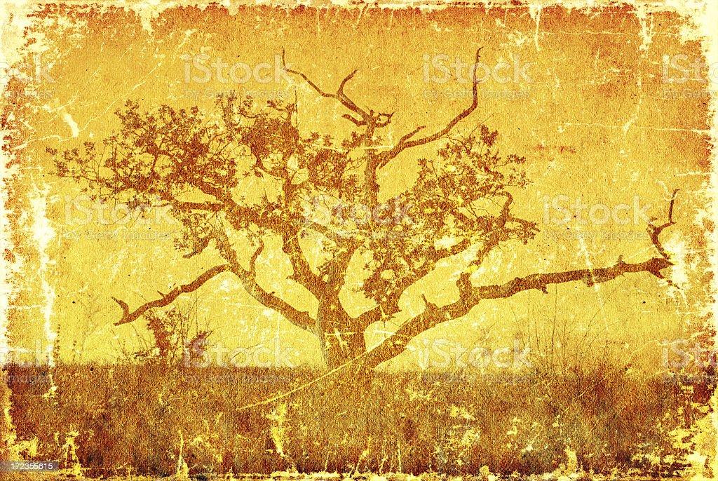 Grunge old tree royalty-free stock photo