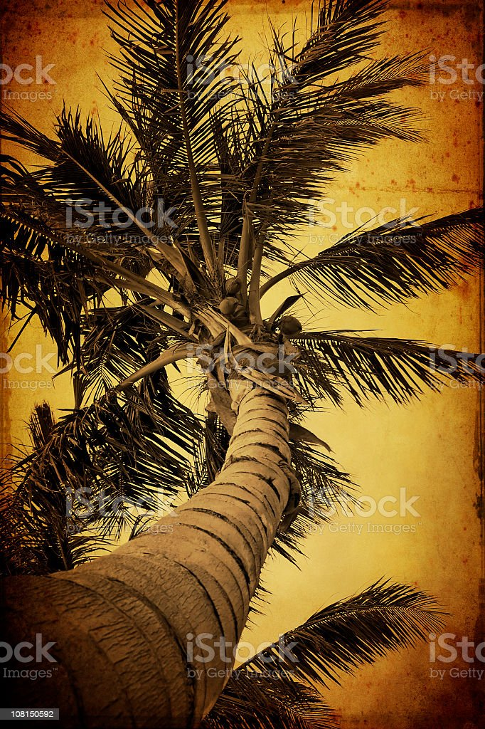 grunge palm royalty-free stock photo