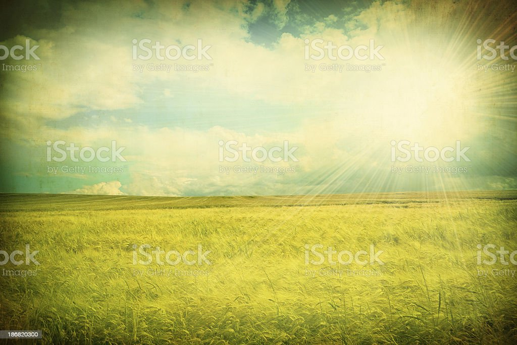 Grunge Summer Landscape With Sun Reflection royalty-free stock photo