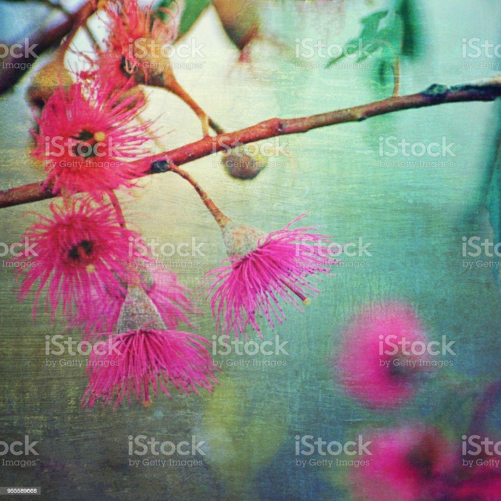 Grunge textured pink flowering gum stock photo more pictures of grunge textured pink flowering gum royalty free stock photo mightylinksfo