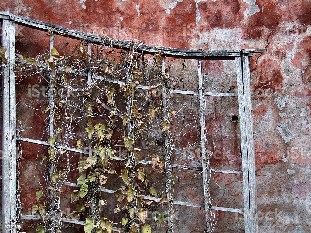 Grunge wall and dry plant royalty-free stock photo