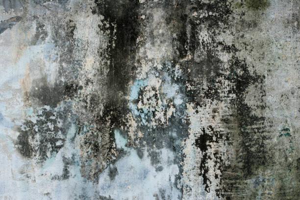 grungy bunte heruntergekommene viertel betonwand - farbe gegen schimmel stock-fotos und bilder