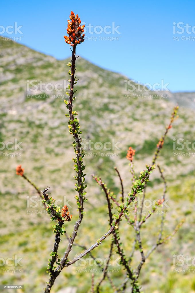 Guadalupe Mountains National Park stock photo