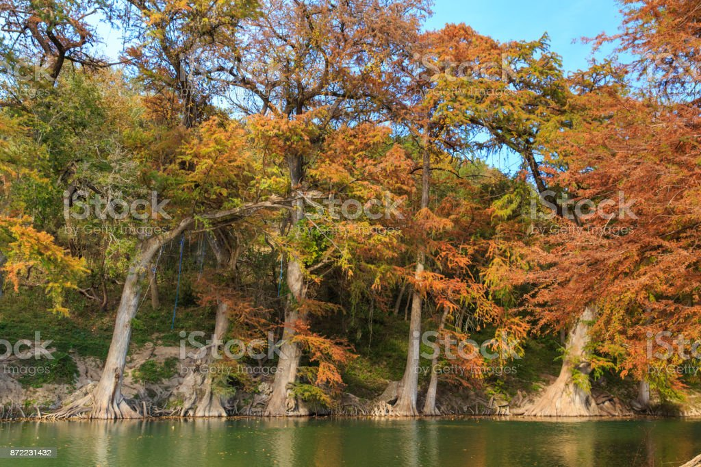 Guadalupe River State Park Cypress Trees stock photo