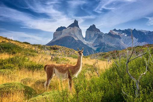 Patagonia - Argentina, Patagonia - Chile, Chile, Puerto Natales, Lake