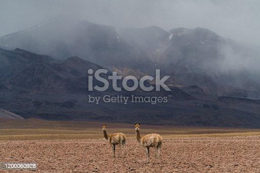 Scenic view of guanacos in Atacama desert in Chile