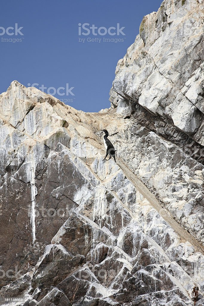 Guanay Cormorant perched on an island outcrop royalty-free stock photo