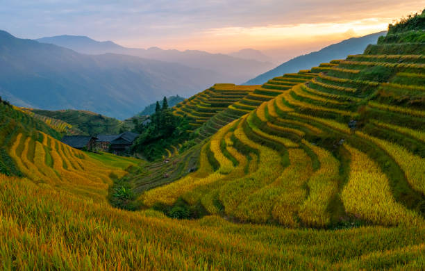 Guangxi Rice Terraces at Sunset, China stock photo