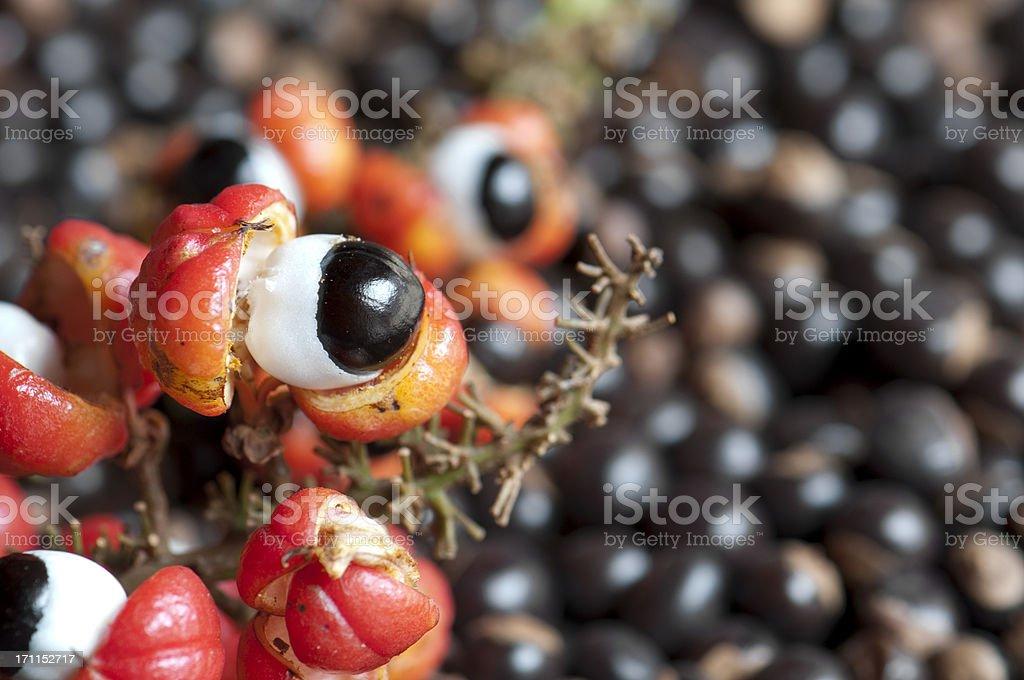 Guaraná Früchten und Samen – Foto