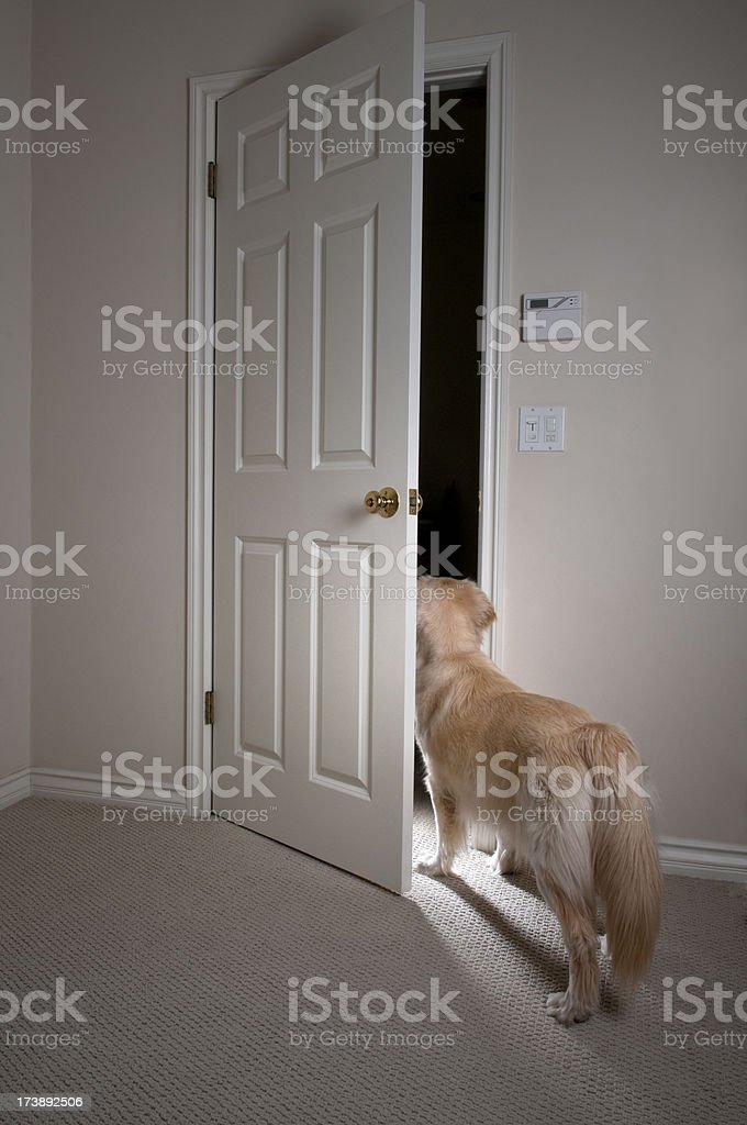 Guard Dog Opening Door stock photo