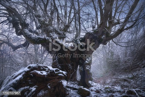 1141614053 istock photo Guardian of the Enchanted Forest. Winter misty forest in georgia, Old tree. racha region in Caucasus Mountains 1200107957