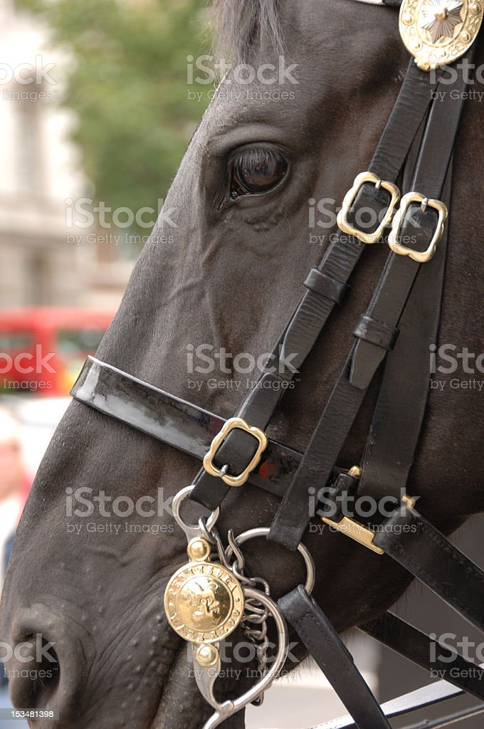 Guardsmans Horse Close-up of the Royal Household Cavalry royalty-free stock photo
