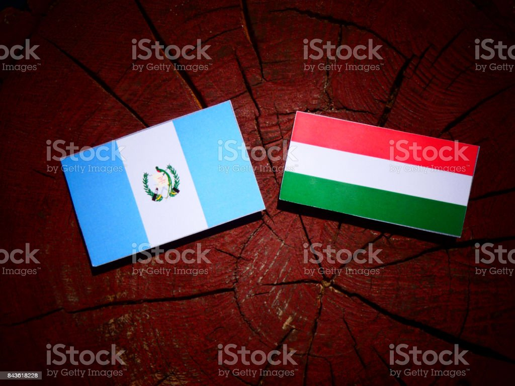Guatemalan flag with Hungarian flag on a tree stump isolated stock photo