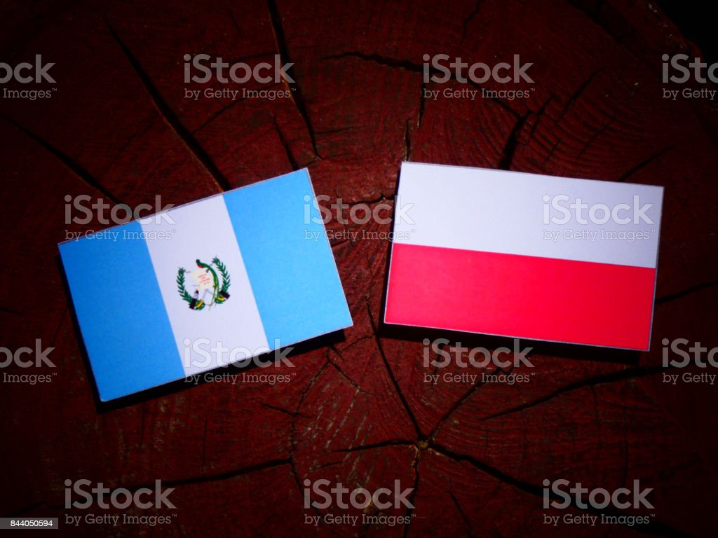 Guatemalan flag with Polish flag on a tree stump isolated stock photo