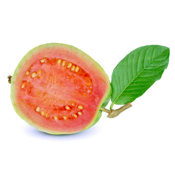 guava fruit isolated on white background guava fruit isolated on white background guava stock pictures, royalty-free photos & images