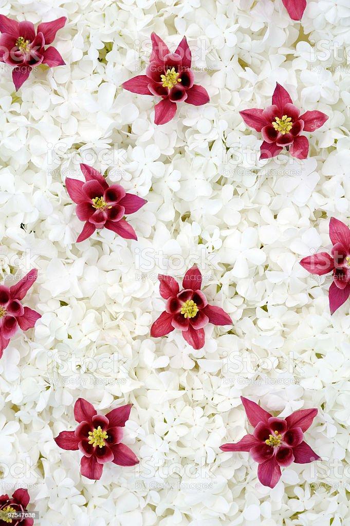 columbine Guelder rose et de fleurs-Fond photo libre de droits
