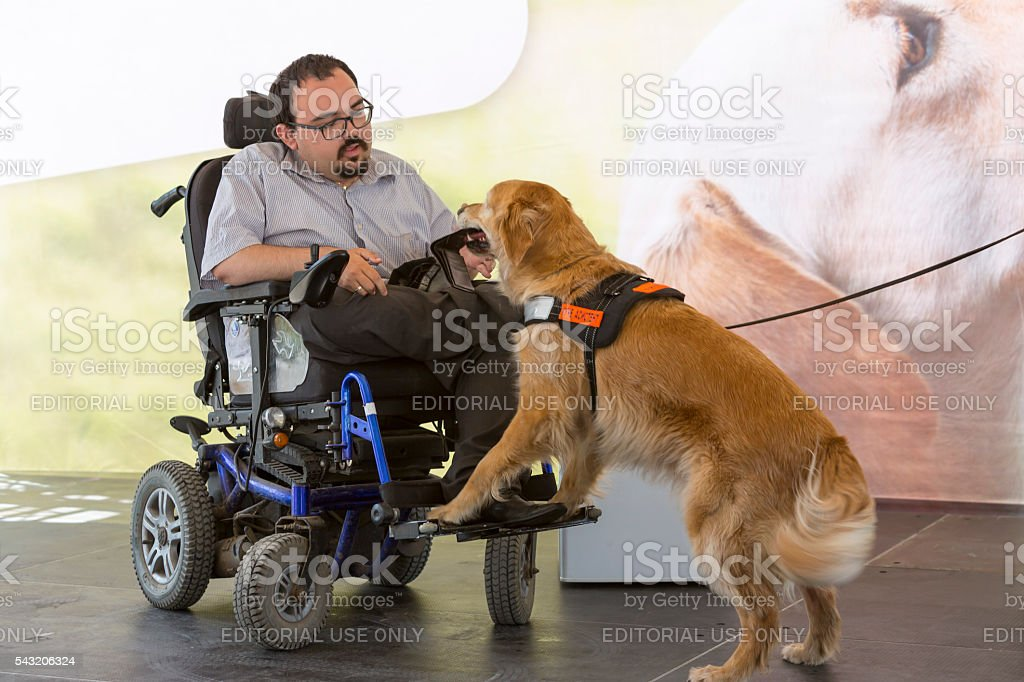 Guide and assistance dog wallet stock photo