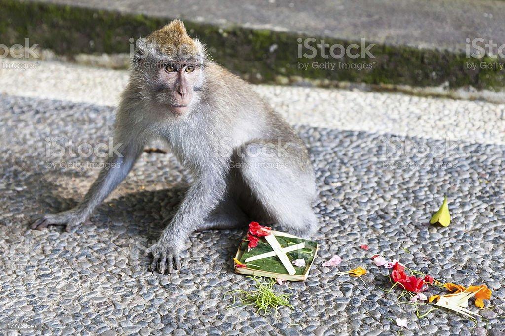 Guilty Monkey stock photo