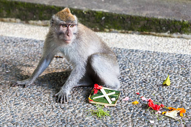 guilty monkey - carolinemaryan stock pictures, royalty-free photos & images