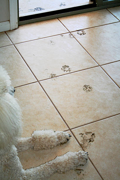 Guilty Muddy dog footprints with dog looking out window