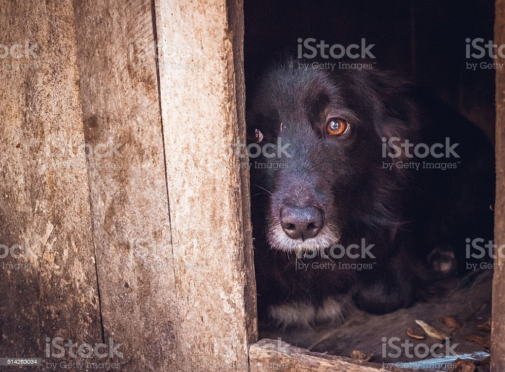 Guilty. Sad injured dog stock photo