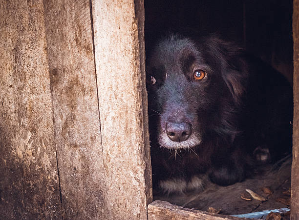 Guilty. Sad injured dog A shelter for animals. Pity and compassion. Poor expelled dog waiting for its master sheltering stock pictures, royalty-free photos & images
