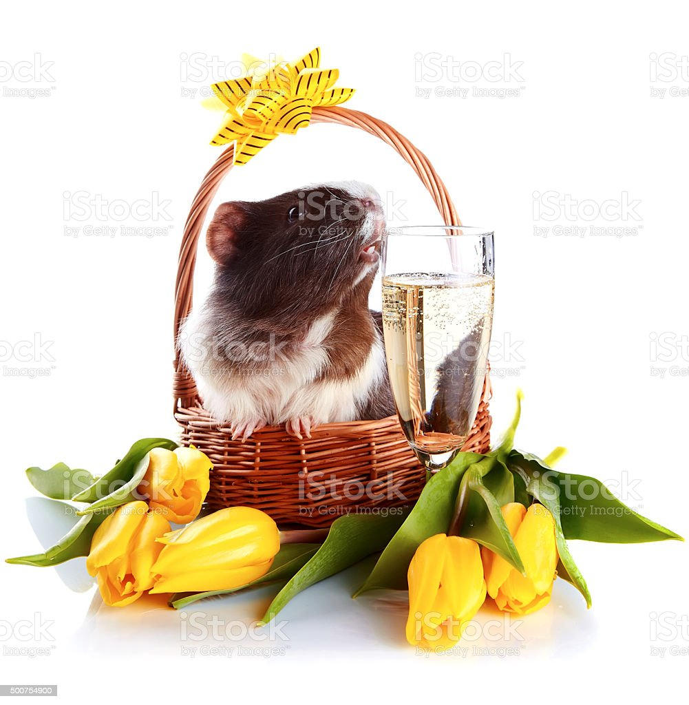 Guinea Pig In A Basket With A Flowers And A Champagne Glass Stock
