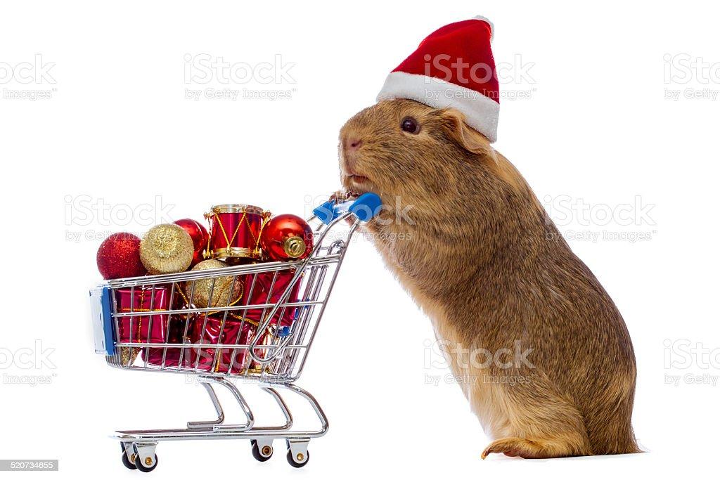 Meerschweinchen Mit Weihnachtsshopping Cart Stock-Fotografie und ...