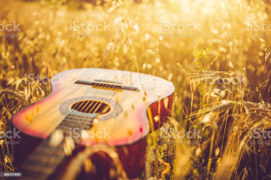 Guitar in the field of wheat on sunny day. stock photo