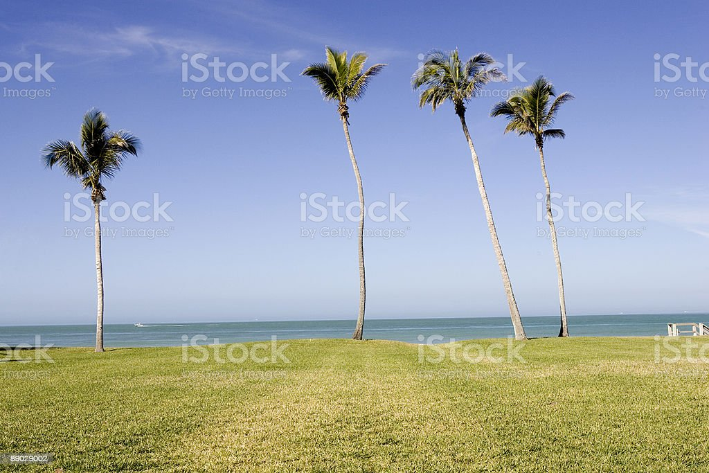 Gulf & Palm Trees royalty-free stock photo
