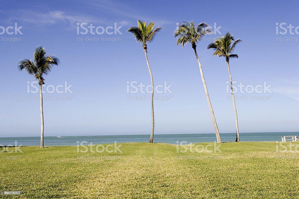 Gulf & palmiers photo libre de droits
