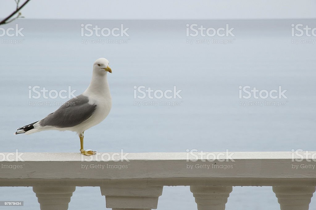 gull and morning sea royalty-free stock photo