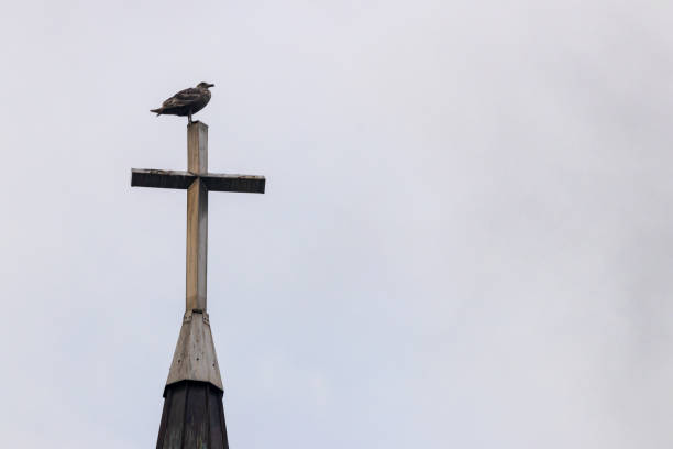 Gull bird perched on top of a church steeple cross with a cloudy sky stock photo