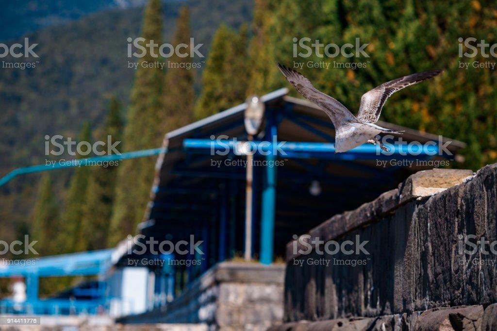 gull flies up stock photo