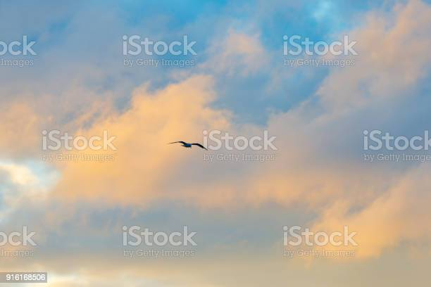 Gull flying in a blue cloudy sky in winter picture id916168506?b=1&k=6&m=916168506&s=612x612&h=14s2atsyacqxn 8axjn yrkzvs2ygb5hziiqyfouapi=